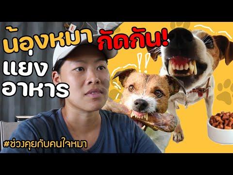 ช่วงคุยกับ Khon Jai Ma | ปัญหาน้องหมากัดกัน