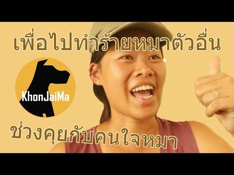 ช่วงคุยกับ Khon Jai Ma   ปัญหาน้องหมากระชากสายจูงเวลาเดิน เพื่อไปทำร้ายหมาตัวอื่น