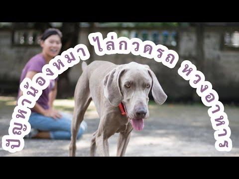 ช่วงคุยกับ Khon Jai Ma | ปัญหาน้องหมาไล่กวดรถ หวงอาหาร