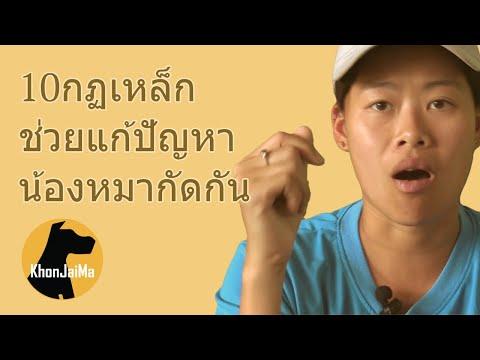 ช่วงคุยกับ Khon Jai Ma | 10กฏเหล็ก ช่วยแก้ปัญหาน้องหมากัดกัน