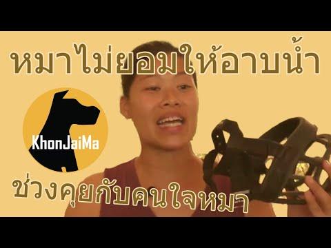 ช่วงคุยกับ Khon Jai Ma | ปัญหาน้องหมาไม่ยอมให้อาบน้ำ