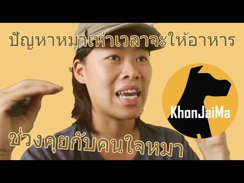ช่วงคุยกับ Khon Jai Ma | ปัญหาหมาเห่าเวลาจะให้อาหาร