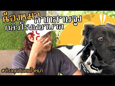 ช่วงคุยกับ Khon Jai Ma | ปัญหาหมาลากสายจูงและกลัวโรงพยาบาล