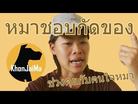 ช่วงคุยกับ Khon Jai Ma   ปัญหาน้องหมาชอบกัดของ และไม่เดินตามสายจูง