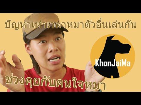 ช่วงคุยกับ Khon Jai Ma   ปัญหาเห่าเวลาหมาตัวอื่นเล่นกัน