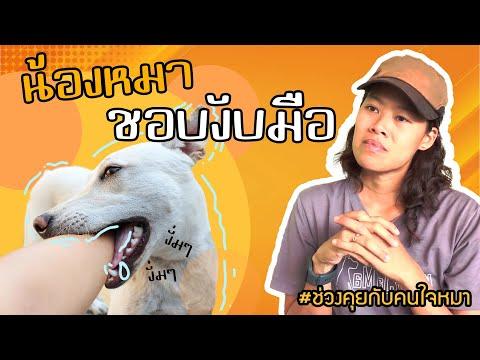 ช่วงคุยกับ Khon Jai Ma   ปัญหาหมาน้องหมาชอบงับมือ