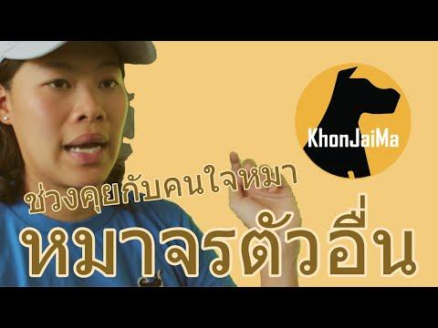 ช่วงคุยกับ Khon Jai Ma | ปัญหาป้องกันตัวเองจากหมาจรตัวอื่น