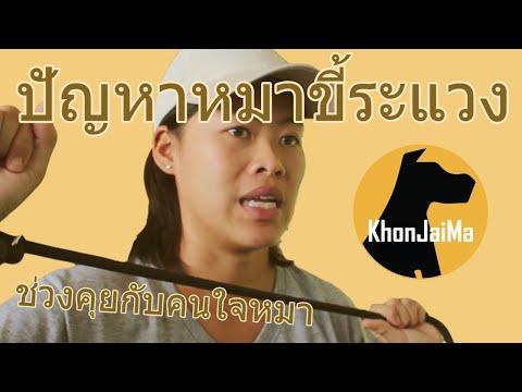 ช่วงคุยกับ Khon Jai Ma | ปัญหาหมาขี้ระแวง
