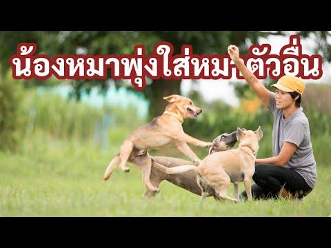 ช่วงคุยกับ Khon Jai Ma   ปัญหาหมาน้องหมาพุ่งใส่หมาตัวอื่น
