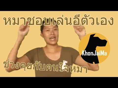 ช่วงคุยกับ Khon Jai Ma   ปัญหาน้องหมาชอบเล่นอึตัวเอง