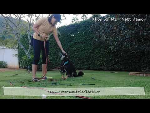 Khon Jai Ma   ชาโดว์ หมากัดคนแปลกหน้า กับการแตะตัวได้ครั้งแรก