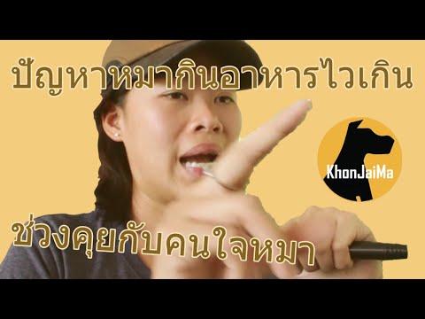 ช่วงคุยกับ Khon Jai Ma | ปัญหาหมากินอาหารไวเกิน