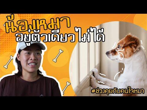 ช่วงคุยกับ Khon Jai Ma | ปัญหาน้องหมาอยู่ตัวเดียวไม่ไดด