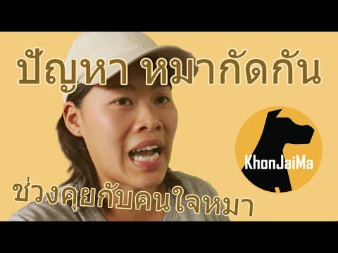 ช่วงคุยกับ Khon Jai Ma   ปัญหาหมากัดกัน
