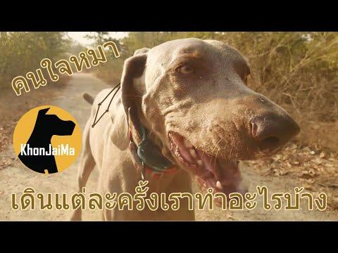 Khon Jai Ma   เดินแต่ละครั้งเราทำอะไรบ้าง
