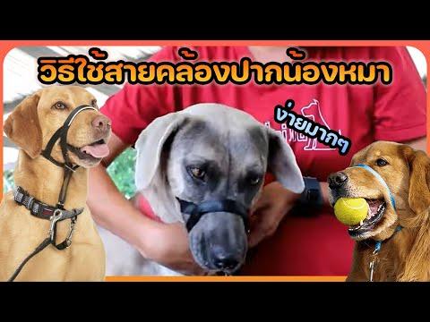 Khon Jai Ma | วิธีใช้สายคล้องปากสุนัข