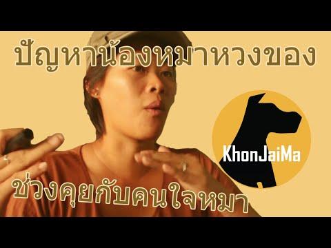 ช่วงคุยกับ Khon Jai Ma | ปัญหาน้องหมาหวงของ