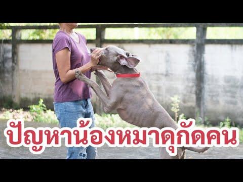 ช่วงคุยกับ Khon Jai Ma | ปัญหาน้องหมาดุกัดคน กัดแม้แจ่เจ้านายตัวเอง