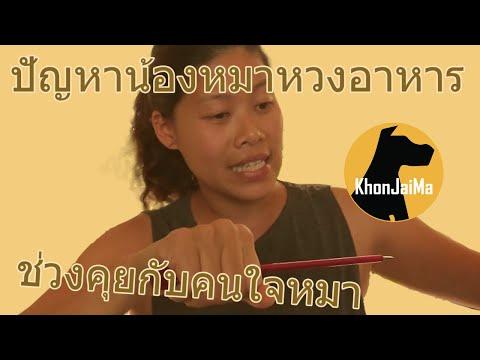 ช่วงคุยกับ Khon Jai Ma   ปัญหาน้องหมาหวงอาหาร