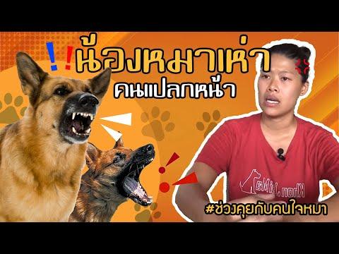 ช่วงคุยกับ Khon Jai Ma   ปัญหาน้องหมาเห่าคนแปลกหน้า
