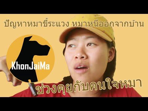 ช่วงคุยกับ Khon Jai Ma   ปัญหาหมาขี้ระแวง หมาหนีออกจากบ้าน