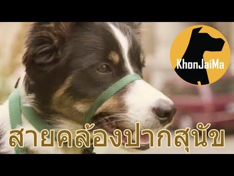 Khon Jai Ma | สายคล้องปากสุนัขคืออะไร