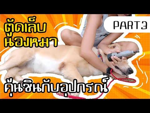 ตัดเล็บน้องหมา Part 3 - สอนให้สุนัขคุ้นชินกับอุปกรณ์ตัดเล็บ