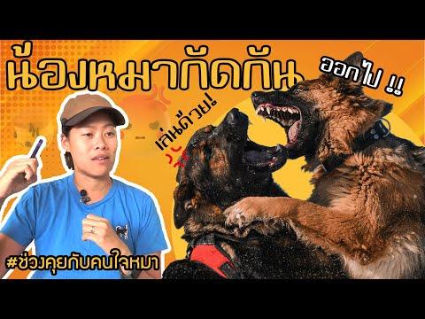 ช่วงคุยกับ Khon Jai Ma   ปัญหาหมาน้องกัดกันเอง