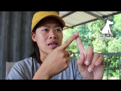 ช่วงคุยกับ Khon Jai Ma | ปัญหาหมาชอบกัดไก่
