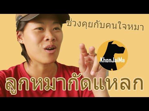ช่วงคุยกับ Khon Jai Ma | ปัญหาลูกหมากัดแหลก