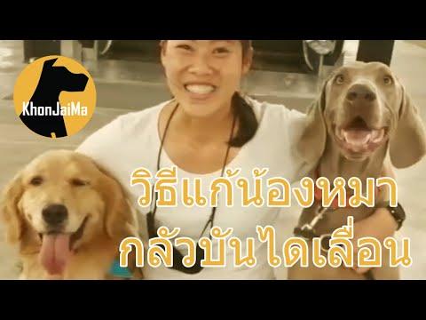 Khon Jai Ma   วิธีแก้น้องหมากลัวบันไดเลื่อน