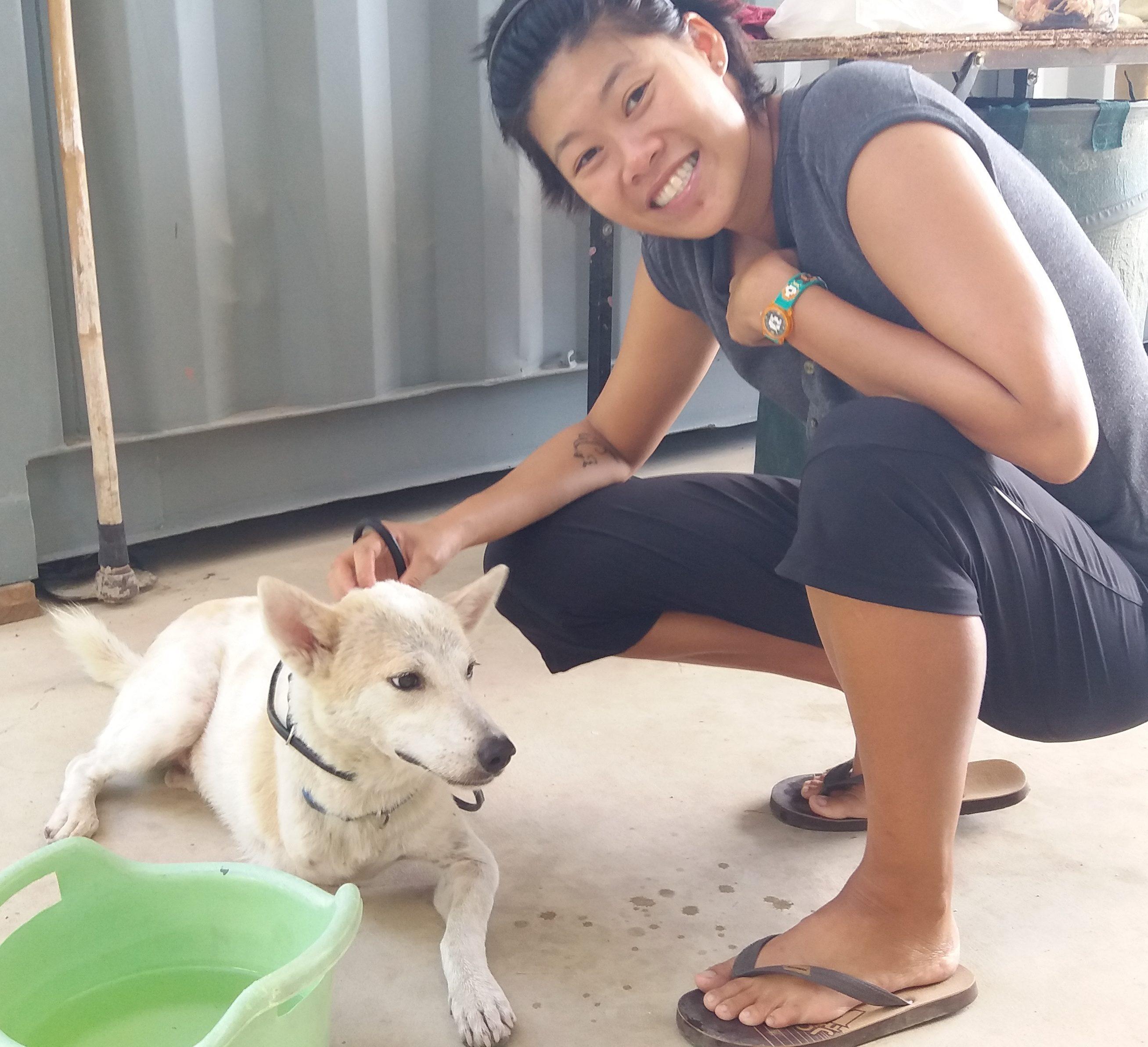 Thai Help Dog - Khon Jai Ma | คนใจหมา